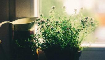 House plants thumb