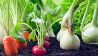 Planting Vegetables In Flower Beds And Borders