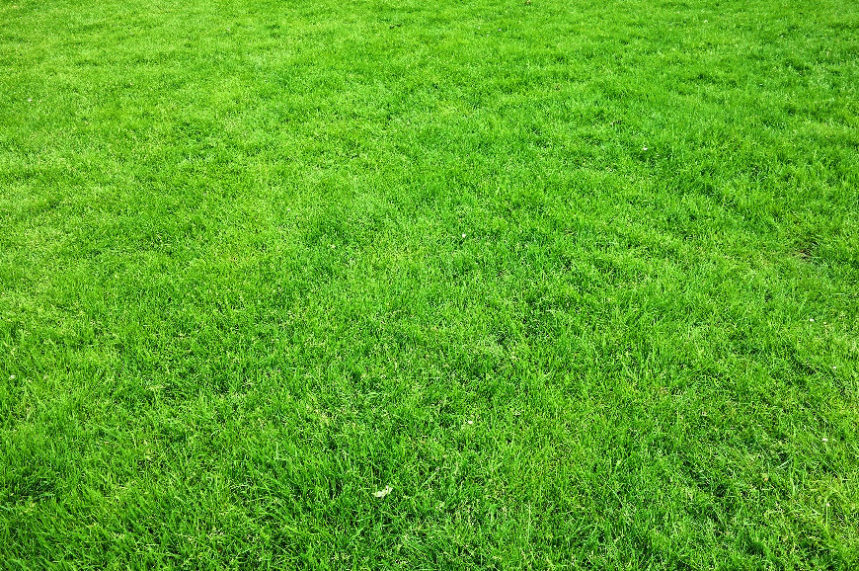 When to lay turf