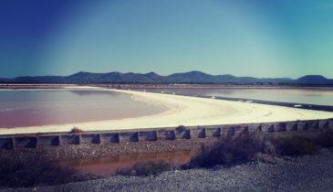 Salt Pan In Sardinia