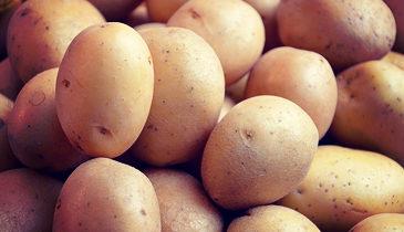 Potatoe 2