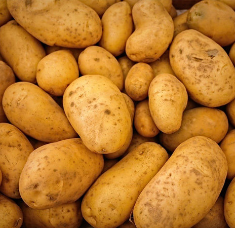 Potato Square