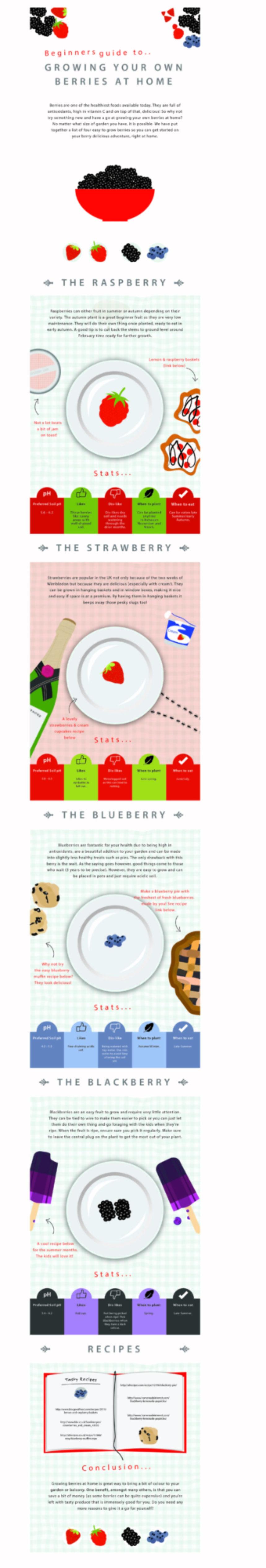 Beginners Guide To Growing Berries