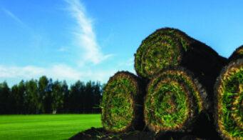 Grass Turf Uk