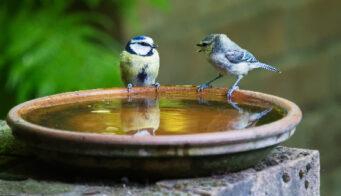 Birdbath Thumb