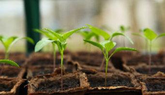 Gardening for beginners thumb