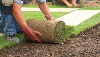 Laying Turf After Delivery