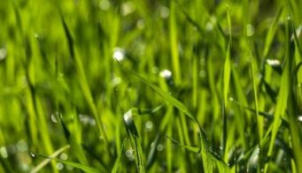 Sowing lawn thumbnail